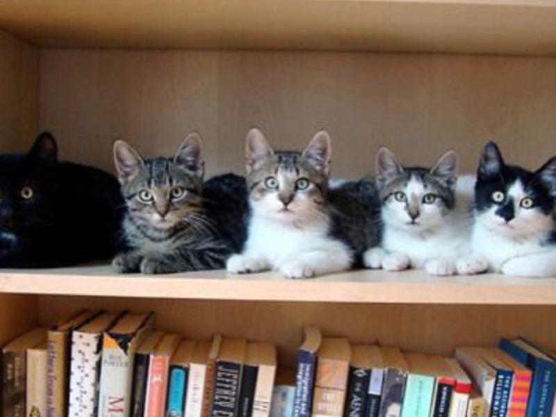 Коты сидят на полке
