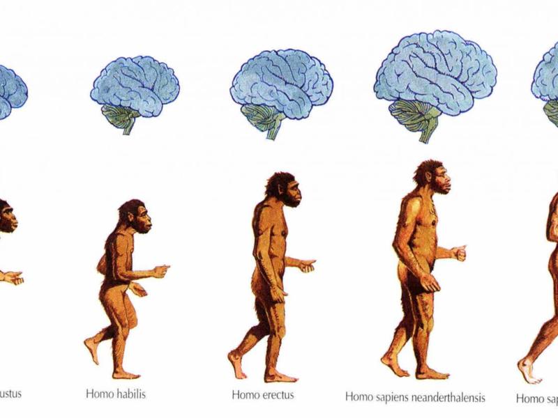Биологический и исторический онтогенез