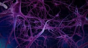 Подразделения синапсов