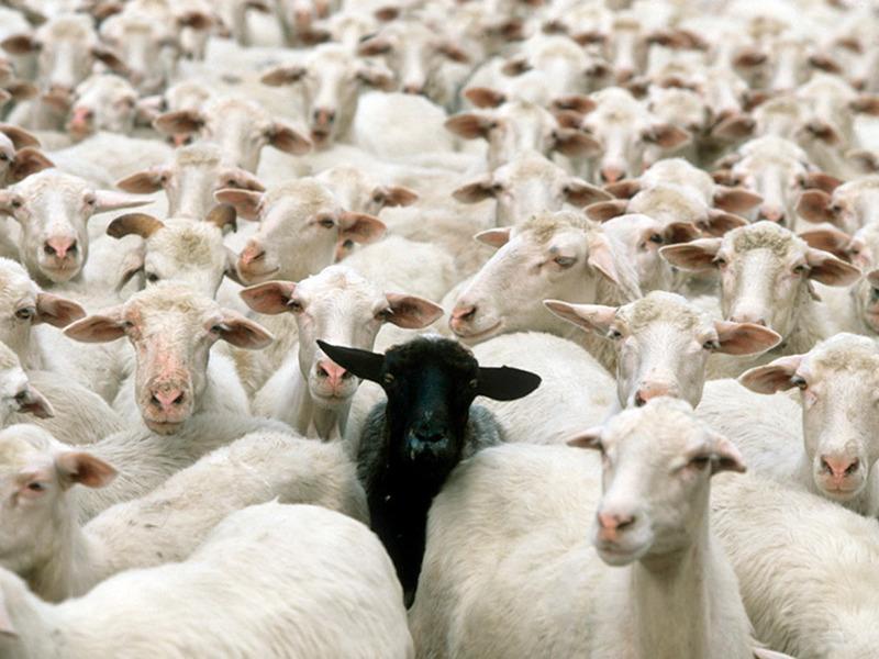 Не бойтесь выделяться из толпы