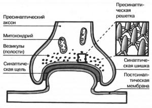 Этапы синаптической передачи